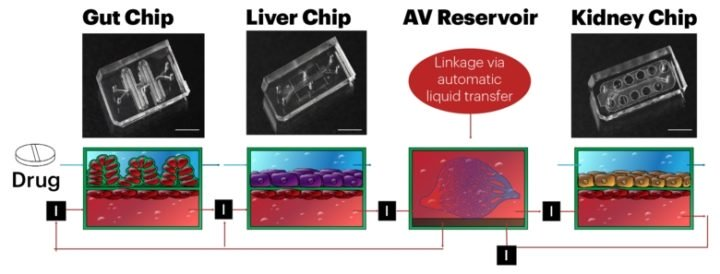 body on chip technology for human drug testing for